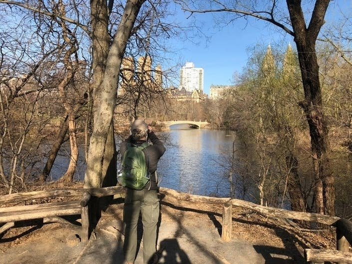Christmas Bird Count To Tally Central Parks Feathered Population
