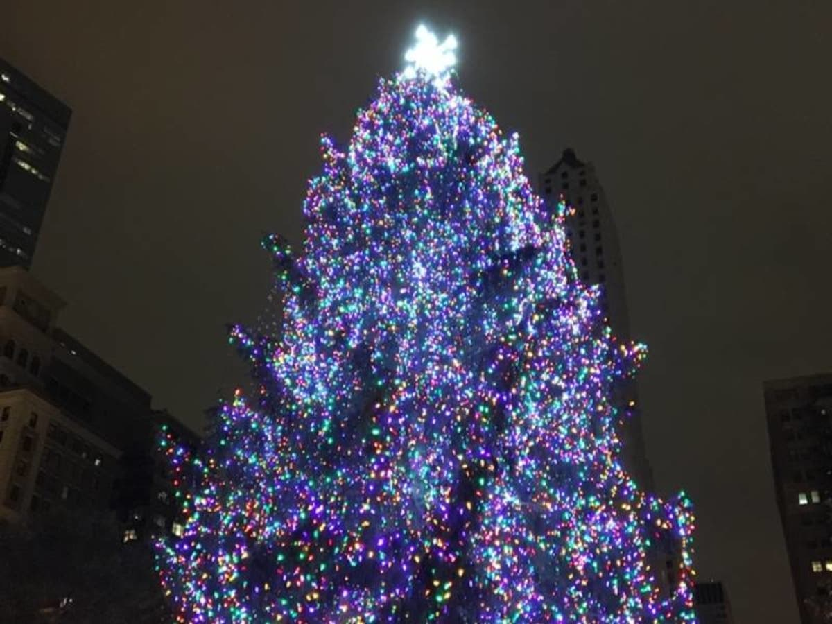 Chicago Christmas.Grayslake Family S Spruce Wins Chicago Christmas Tree