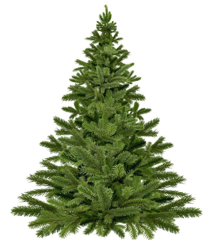 Christmas Tree Disposal San Diego: Pflugerville Christmas Tree Recycling