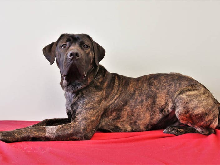 Big Dogs Up For Adoption: Thats A Lot Of Dog