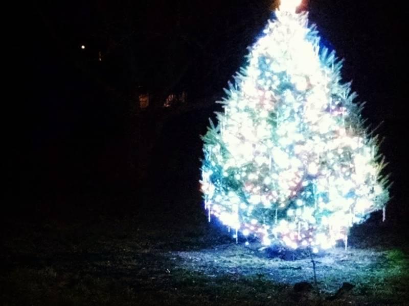 Boston Christmas Tree Lightings 2018: What To Know