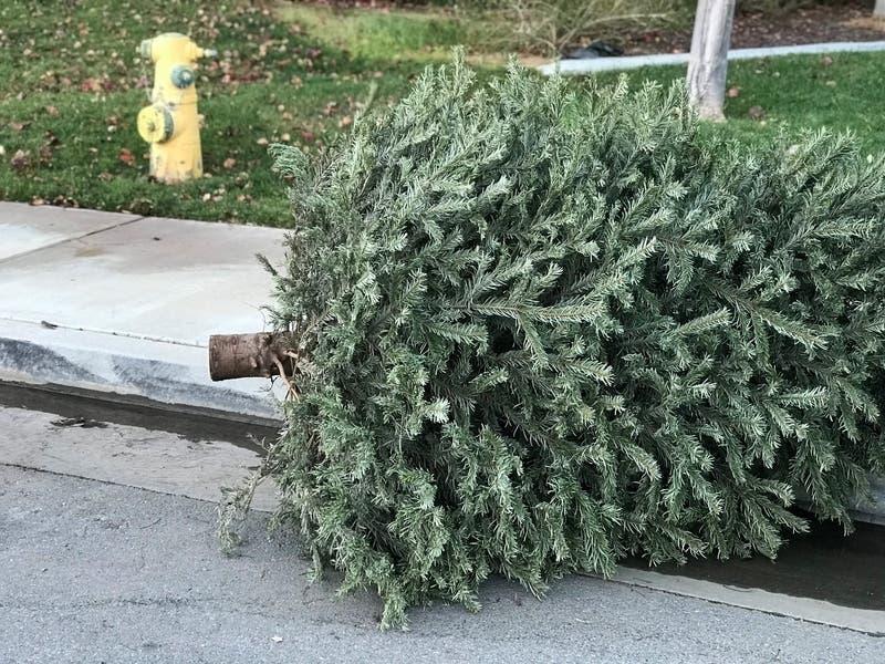Christmas Tree Pickup Medford Ma 2021