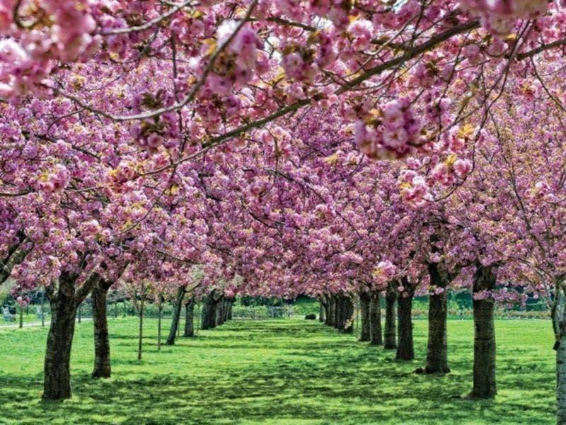 Brooklyn botanic garden cuts free admission hours - Brooklyn botanical garden admission ...
