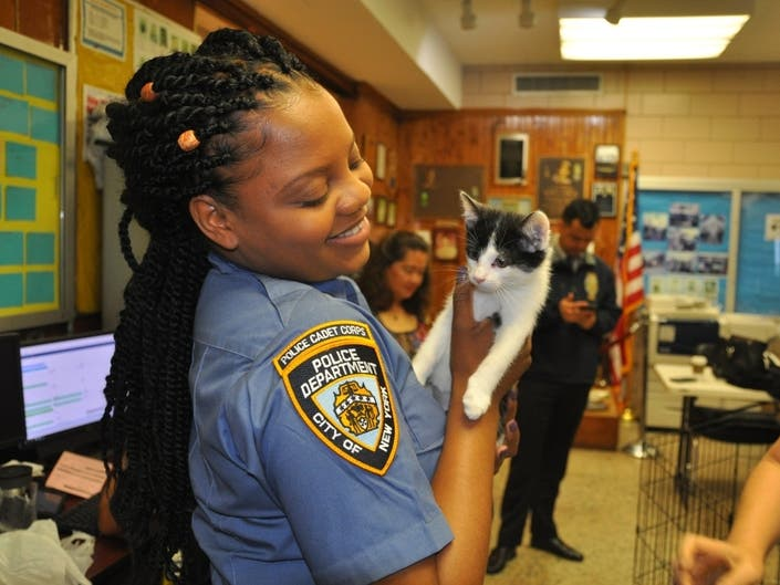 Kittens Taken Into Canarsie Police Custody, Photos Show