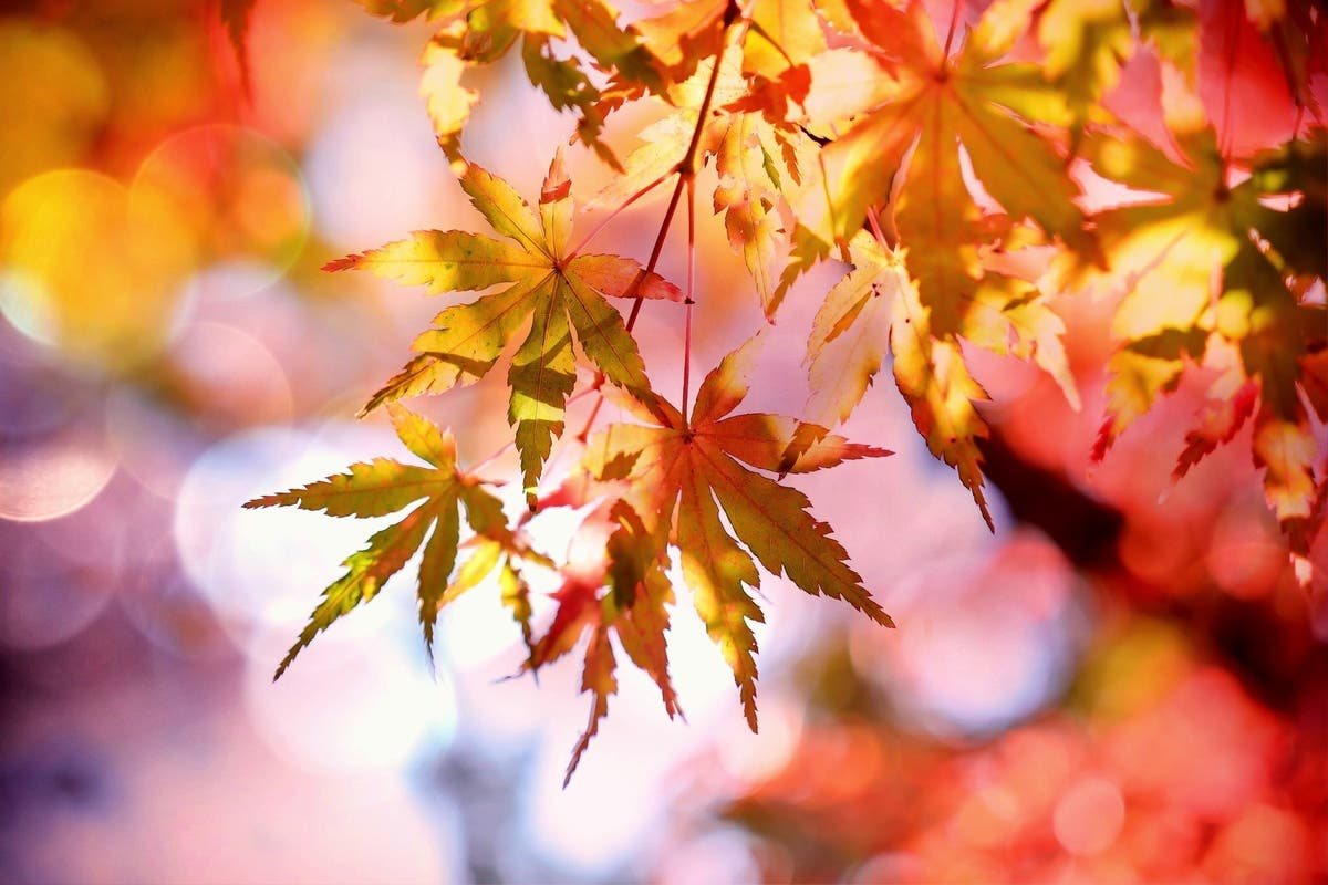Fall Landscaping Ideas 5 Colorful Plants For Northern Virginia