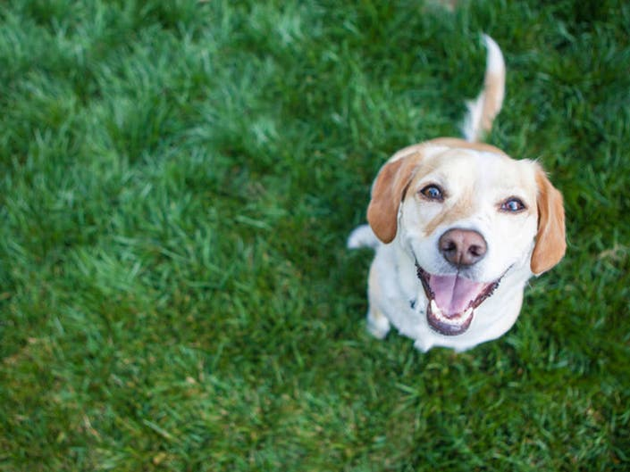 Dog Licks, Loss Of Limbs: 5 Diseases Your Pets Can Give You
