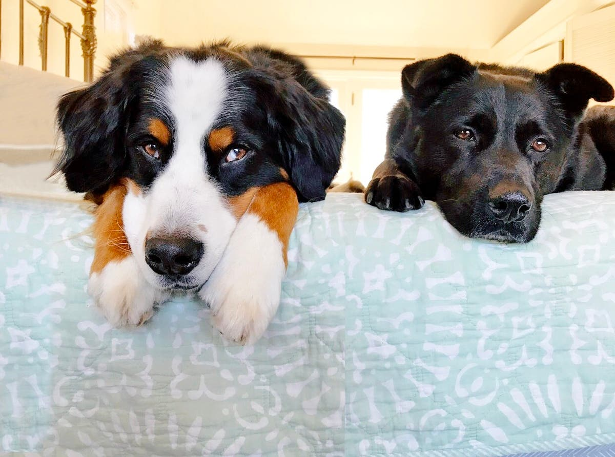 PatchCast: Dog Influencers Bring Home Bacon For CT Native | Orange