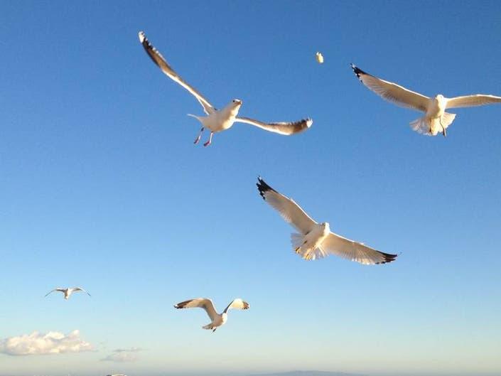 Feeding Seagulls: Malibu Photo Of The Week