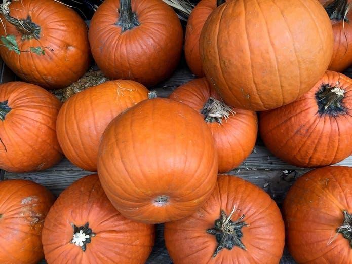 2020 Joliet Il Halloween Activities Manhattan Area Halloween 2020: Pumpkin Patches, Events | Manhattan