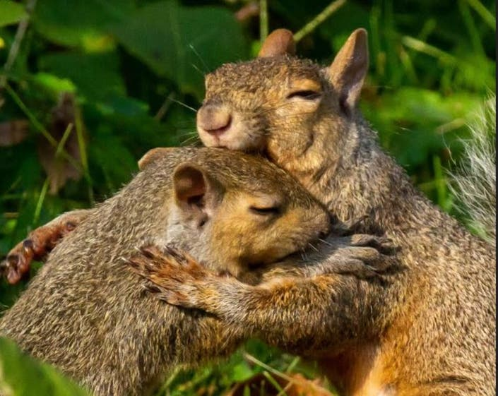 Hugging Squirrels Wins Forest Preserve Photo Contest