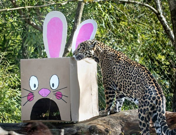 Woodland Park Zoo Plans Easter Festivities Seattle Wa Patch