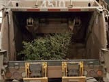 How To Have Your Christmas Tree Collected In Madison