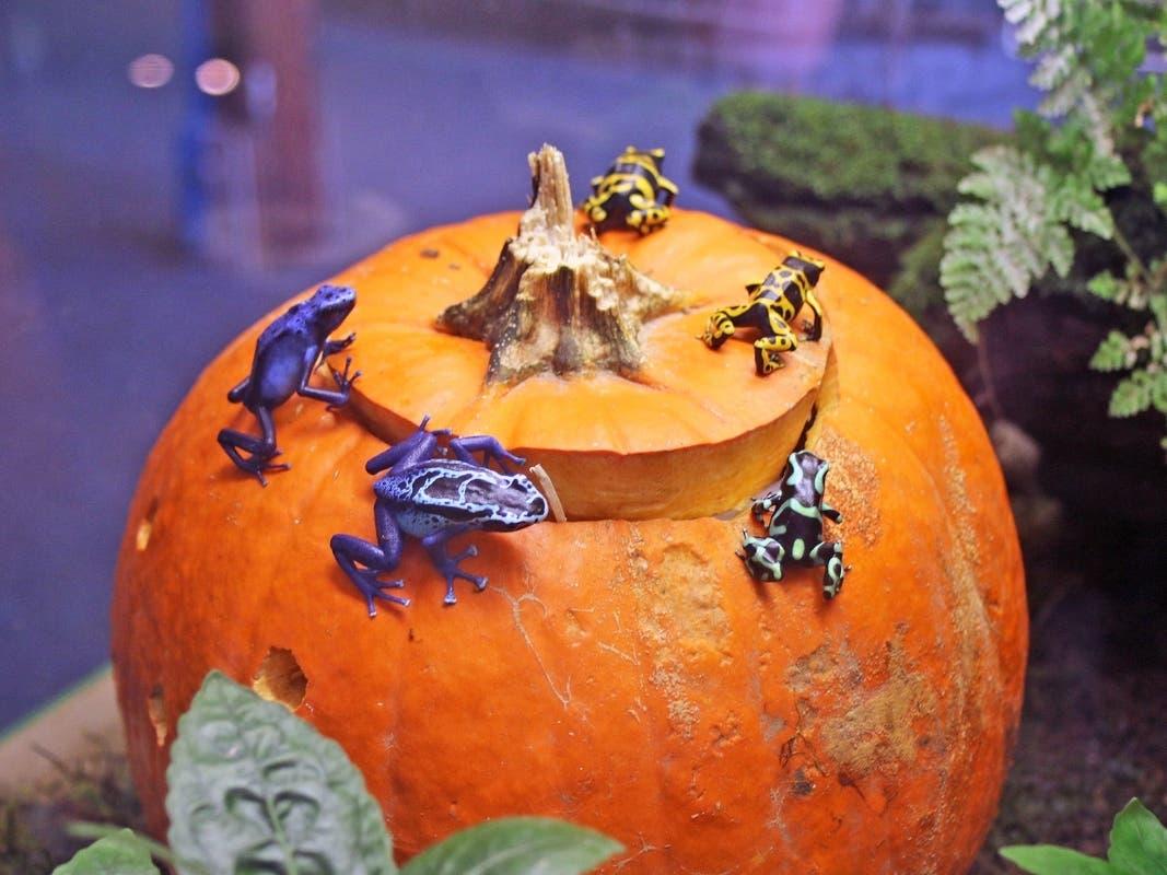 Maritime Aquarium Hosts 'Halloween Stroll' Evenings Oct. 28-30