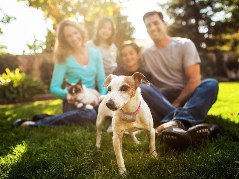 How Invisible Fence By Peachtree Keeps Pets Safe Smyrna