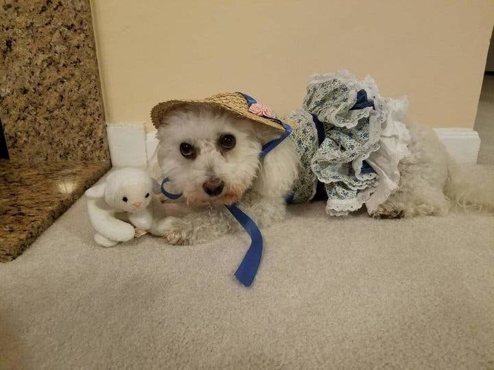 30 Dogs Who Will Make You Rethink Your Halloween Costume