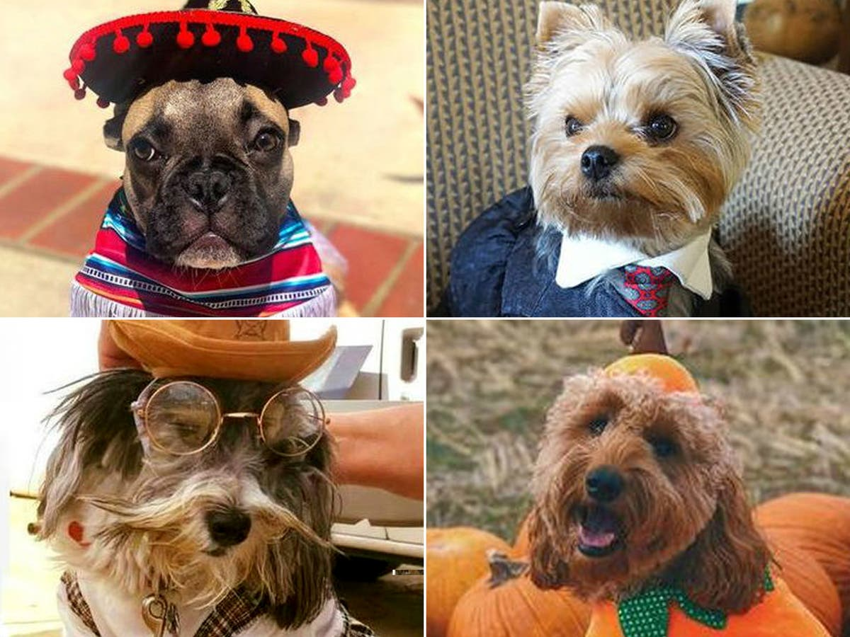 30 Dogs Who Will Make You Rethink Your Halloween Costume ...