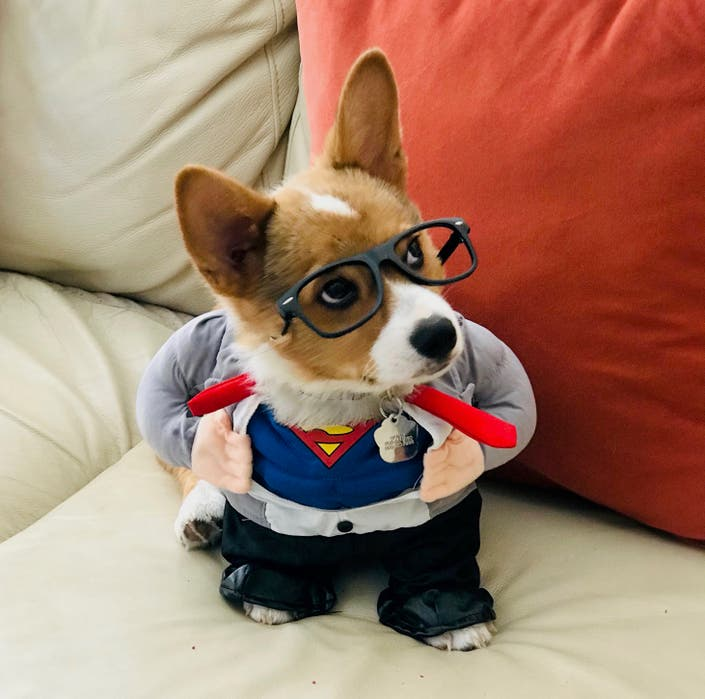 28 Patch Pets In Halloween Costumes That Will Make Your Day