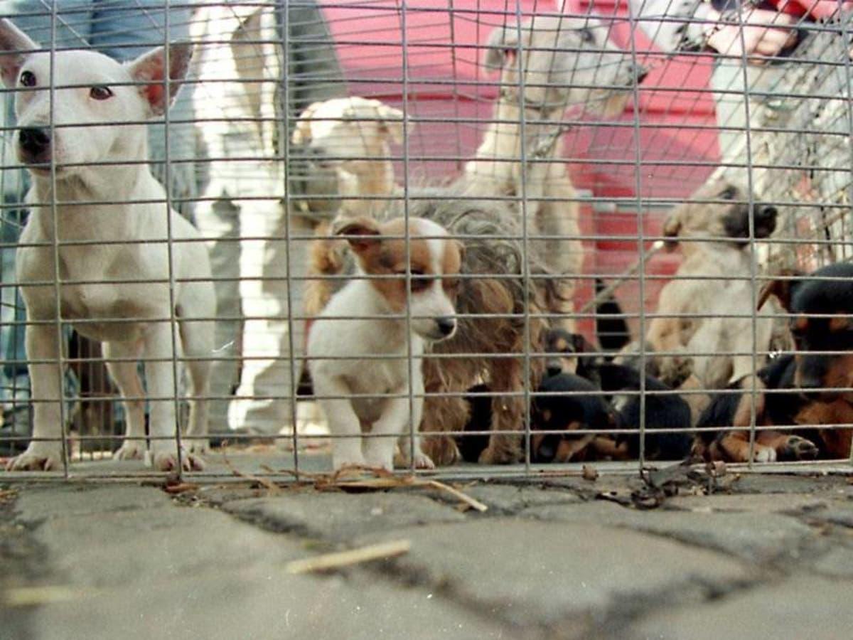 Puppy Scammer List 2020.Florida Dog Breeder Makes Horrible 100 List Of Humane