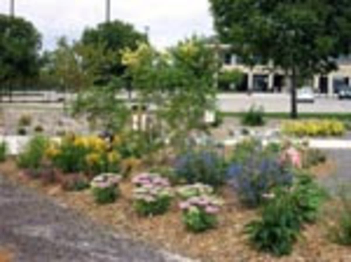 Start Your Broomfield Spring Garden With Free Xeriscape Ideas