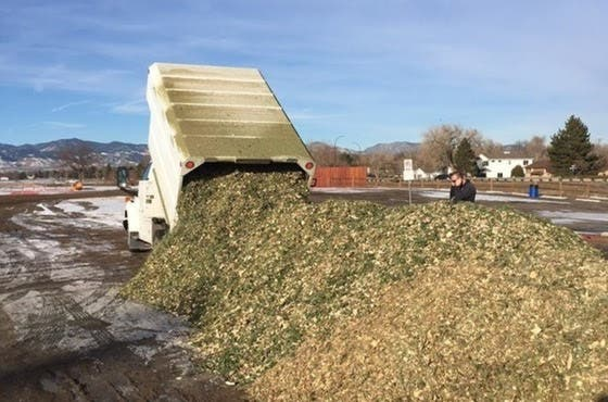 Recycle Christmas Trees At 3 Arvada Locations | Arvada, CO Patch