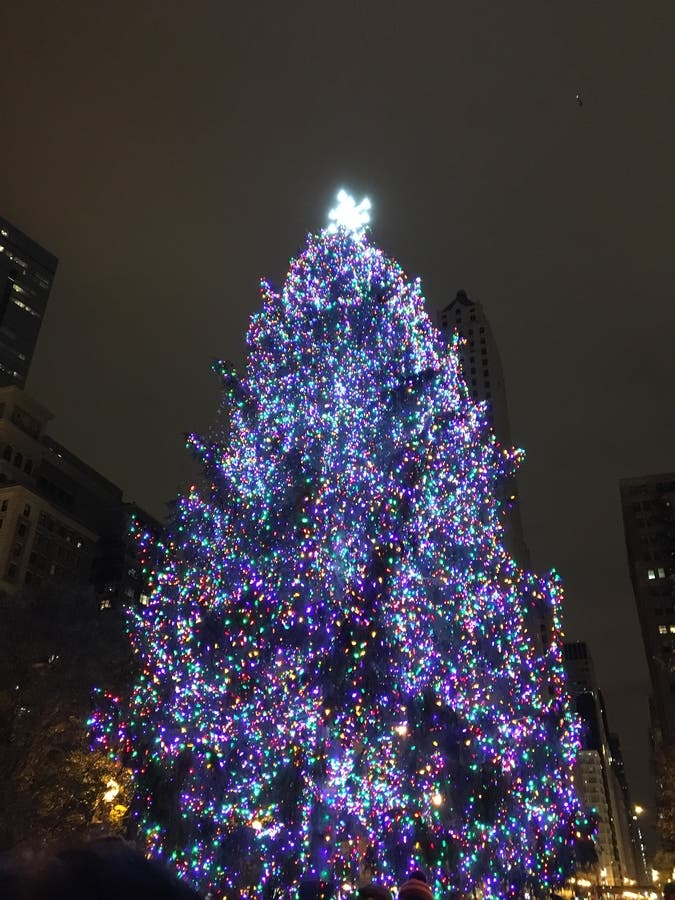 Christmas In Chicago.Chicago Picks Official Christmas Tree For 2017 Chicago Il