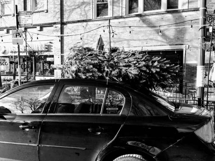 Christmas Tree Recycling On North Side Locations Free Mulch
