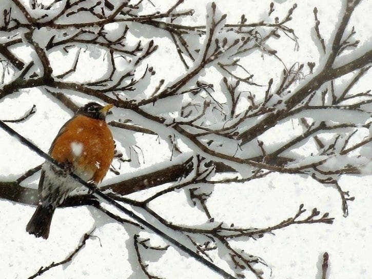 2020 Christmas Bird Count Dates Christmas Bird Count: Register For Holiday Tradition In Boulder