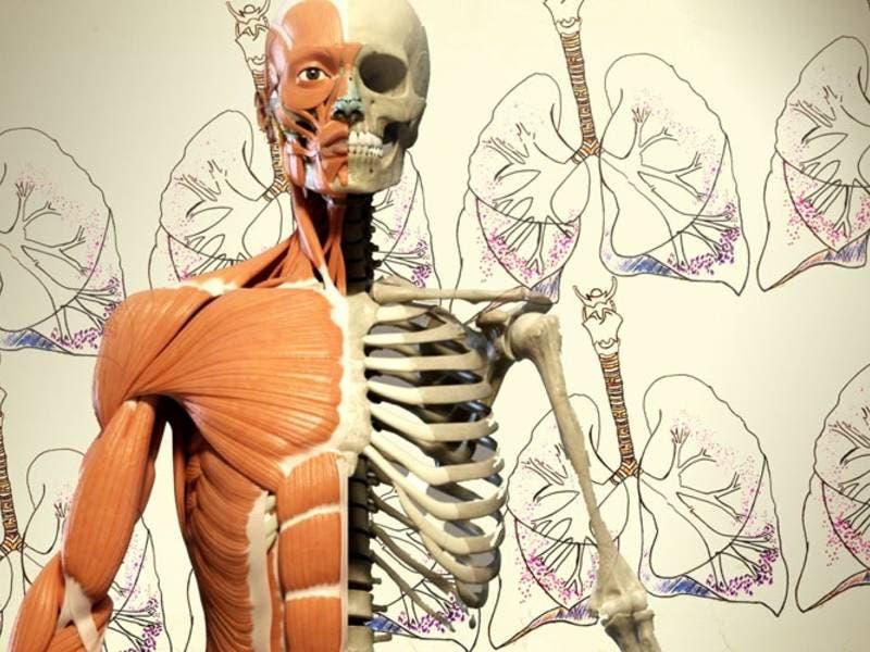 Scottsdale 'Bodies' Exhibit Draws Criticism From Religious
