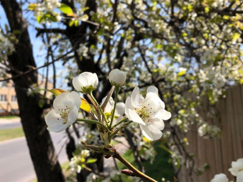 feeling sneezy pollen peaks in dallas allergy forecast dallas