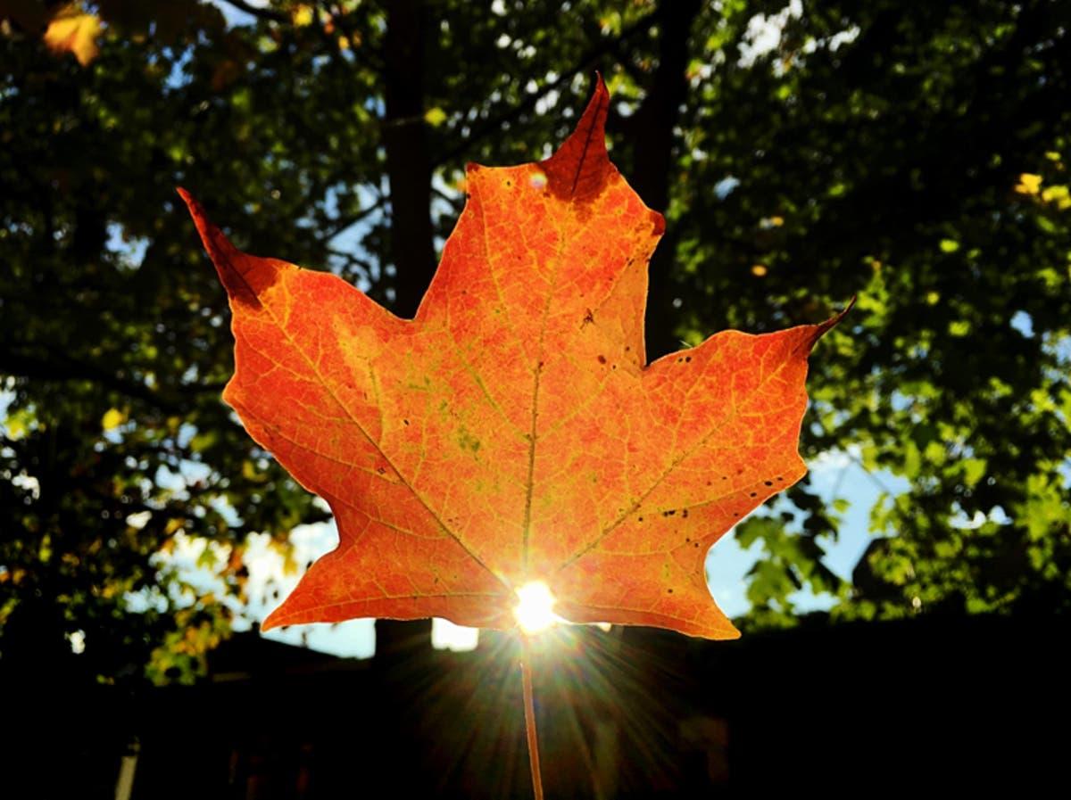 Fall Foliage Map 2018: When Autumn Leaves Will Peak In Missouri | St