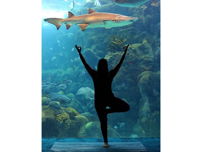 Perfect Your Boat Pose At Yoga With The Fishes At Aquarium