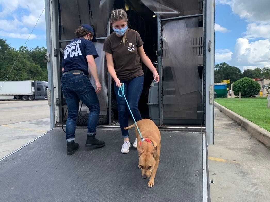 Like It's Raining Cats And Dogs: Floods Prompt Pet Rescue Efforts
