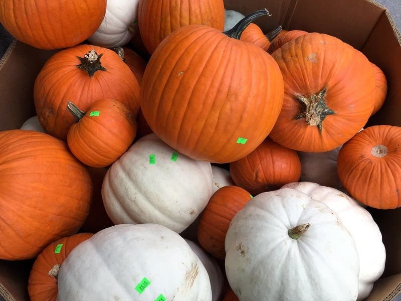 New Port Richey Florida 2020 Christmas Events Best New Port Richey Pumpkin Patches 2020   New Port Richey, FL Patch
