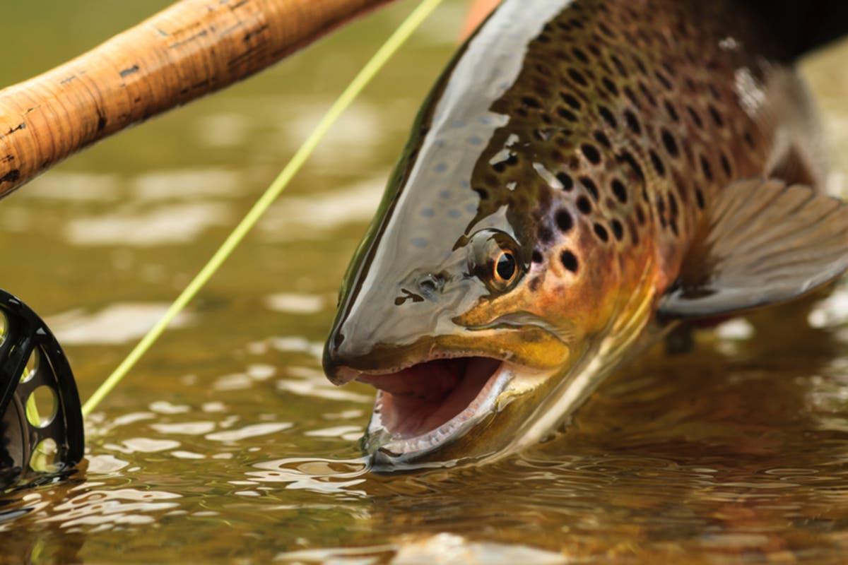 Michigan Extends 'Do Not Eat' Fish Advisory | Detroit, MI Patch