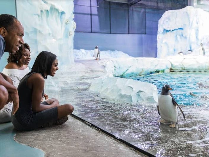 April 25 Is Penguin Day At The Detroit Zoo