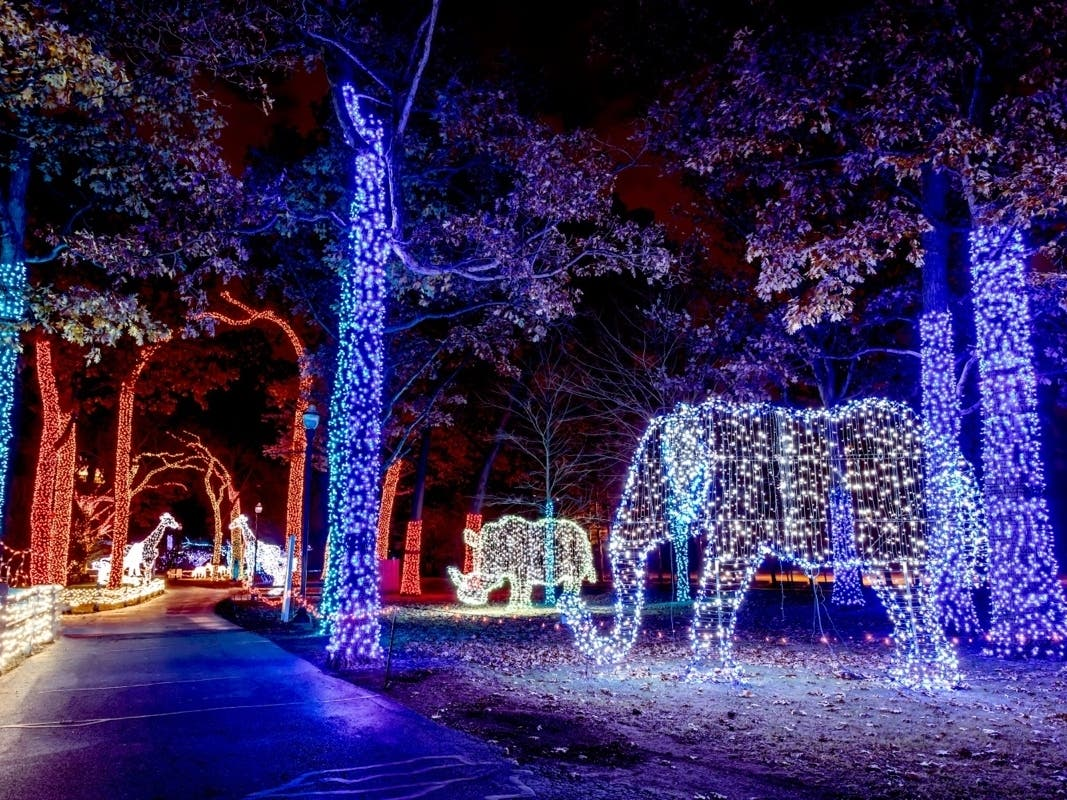 Detroit Zoo Aglow With Wild Lights Event | Royal Oak, MI Patch