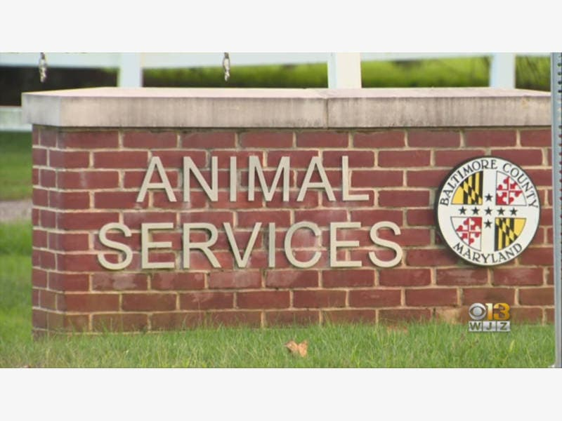 Shakeup At Baltimore County Animal Services