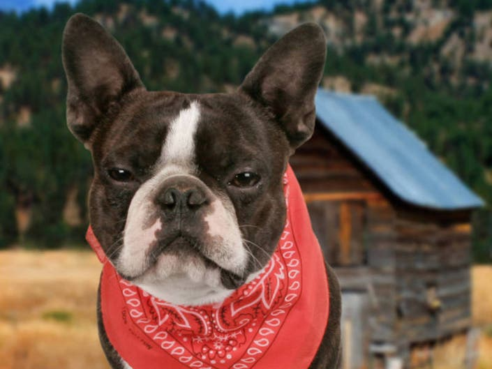 Newtown Offers Dog Obedience Training