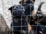 Former Danbury Pet Rescue Under Investigation Again