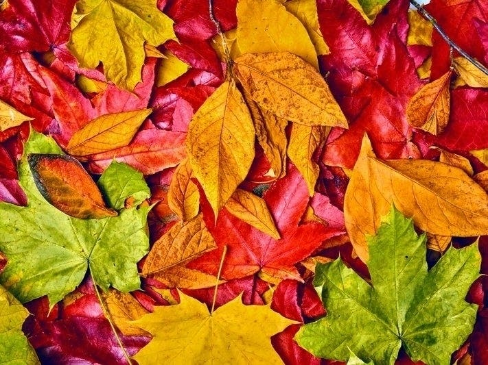 Fall Foliage Peak Map 2019 When Autumn Leaves Are Best In Ct Across Connecticut Ct Patch