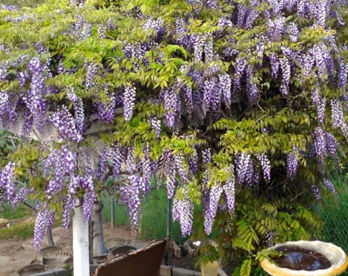 San Juan Garden Club To Host Garden Tours | Laguna Niguel ...