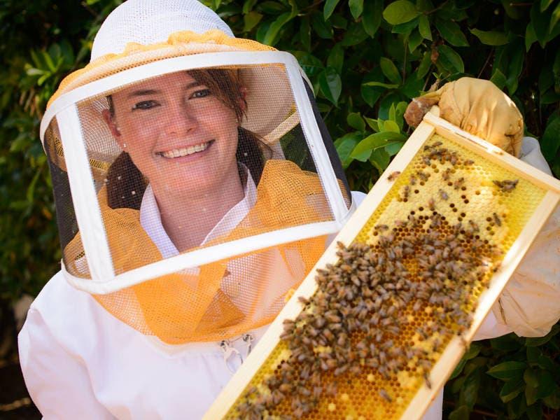 Honeybees Creating Buzz At Peninsula Library, Beyond