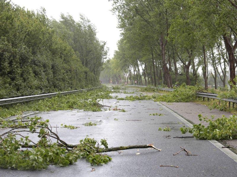 Tree Down Closing Portola Road In Woodside