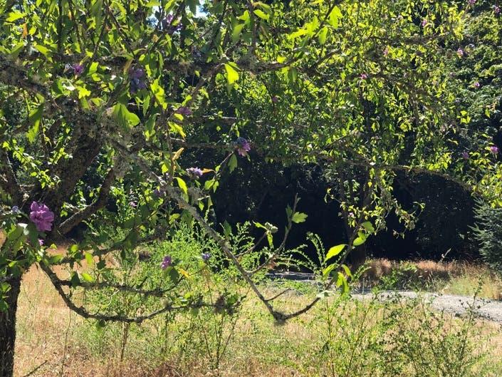 MidPen Seeks Trail Work Volunteers Who Want To Unplug