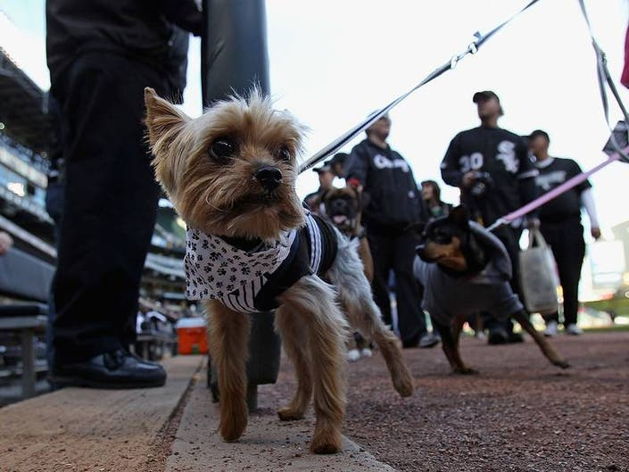 Dallas Animal Services Wins $200,000 Investment