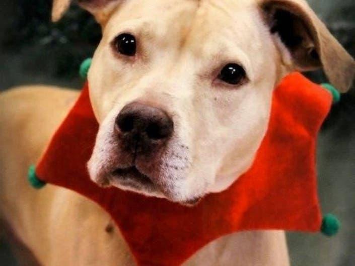 Free Adoptions At Brookhaven Animal Shelter