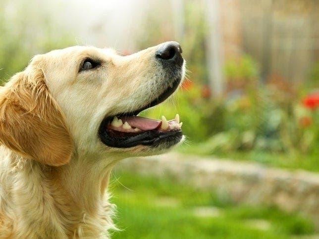 Dog, Cat Adoption Event At PetSmart: Aug  11   Gaithersburg, MD Patch
