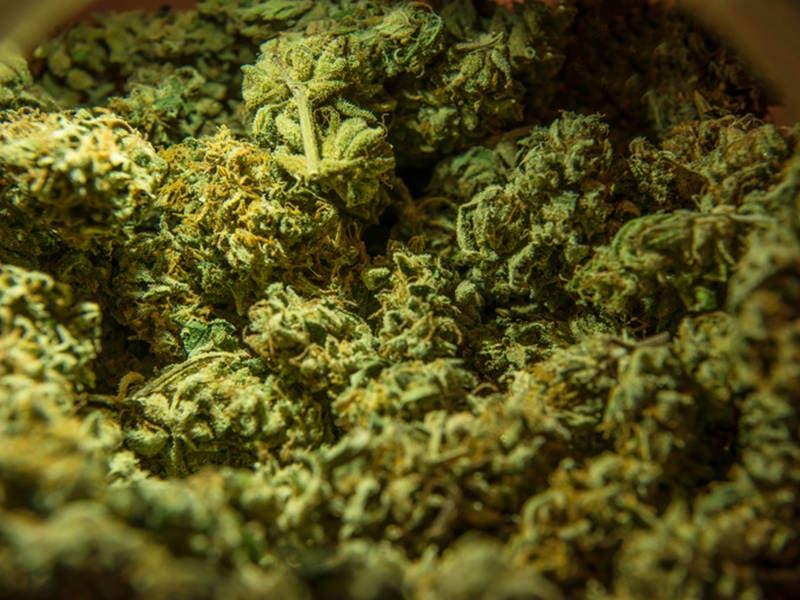 Framingham Gives Marijuana Cultivator Green Light