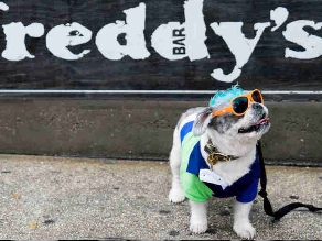 Annual Doggy Dress-Up Fashion Parade Coming To Park Slope