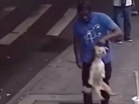 Video: Dog Snatched From Outside Williamsburg Supermarket